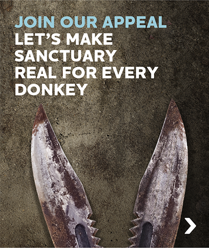 join our appeal
